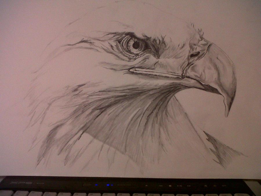 Eagle pencil drawing by sambishop89