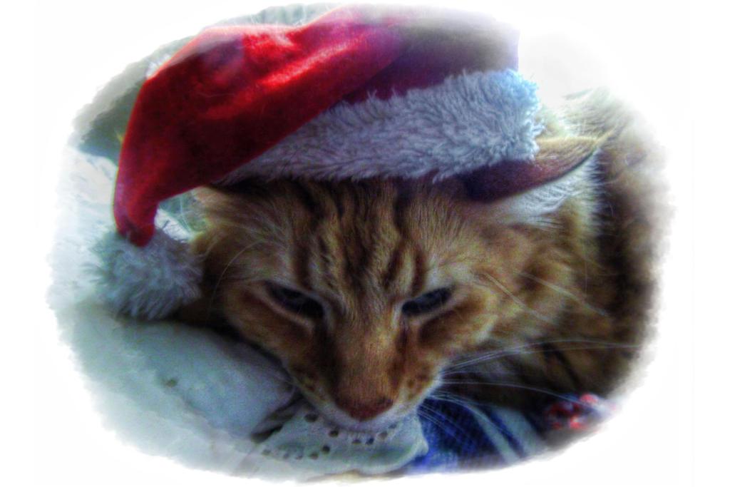 The Night Before Christmas by jim88bro