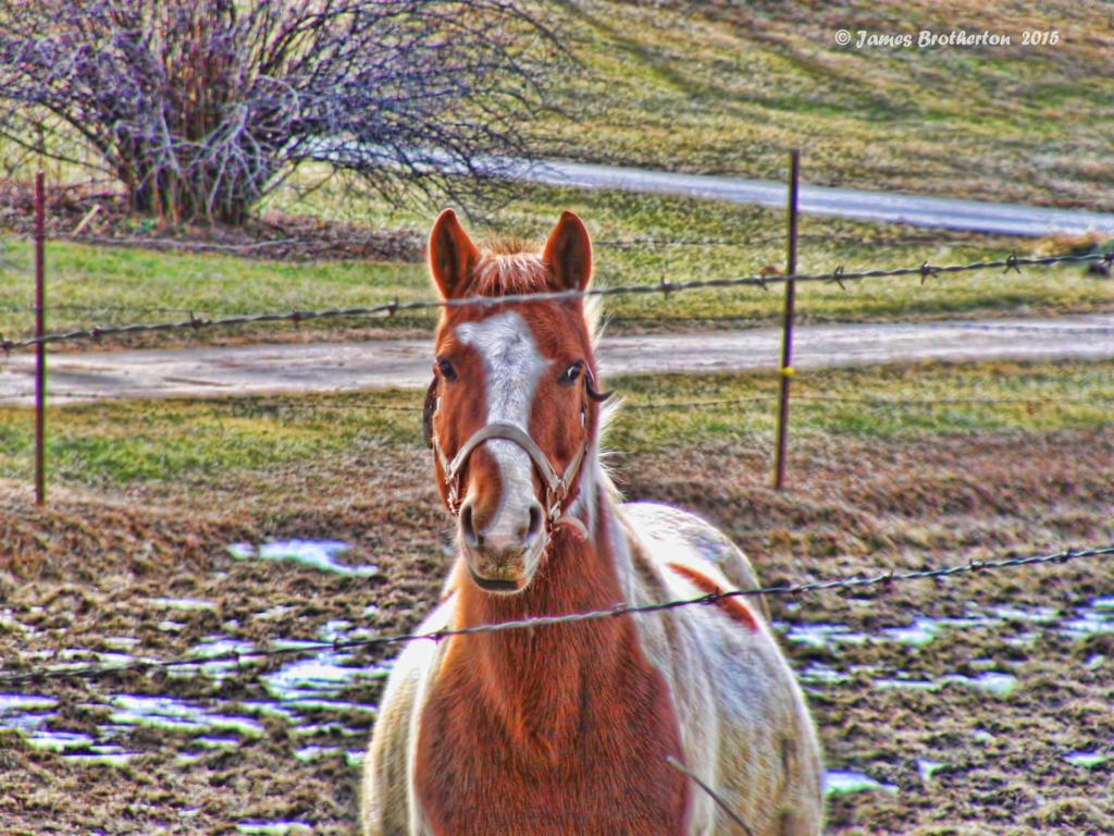 Friendly Farm Horse by jim88bro
