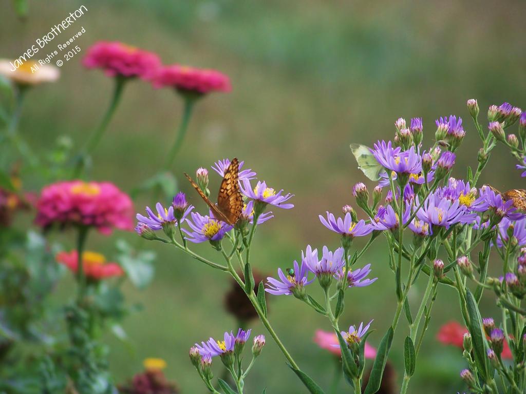Garden Friends by jim88bro