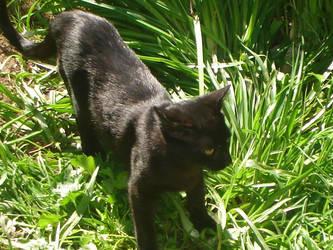 black_cat by petrasoul