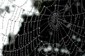 cobweb by Schnubii