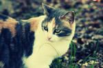 meow. :3