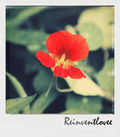 xx76 by reinventlovee