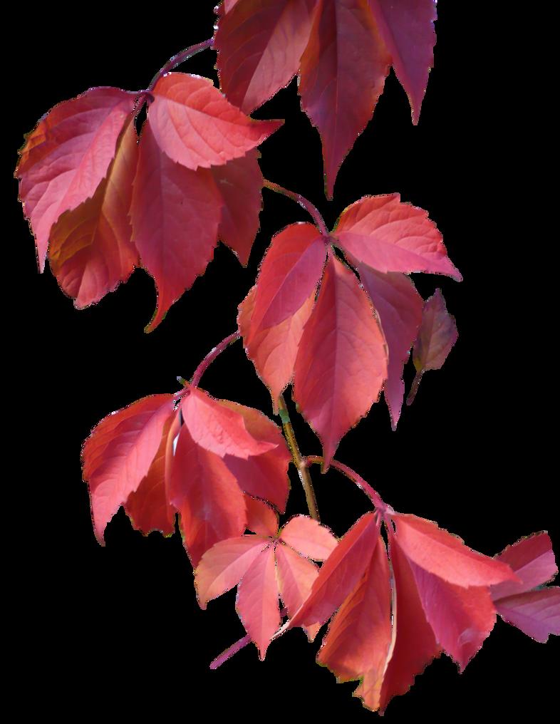 autumn leaves png. by erdmute on DeviantArt