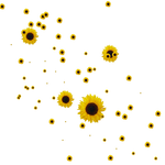 Sunflower Brushes-png