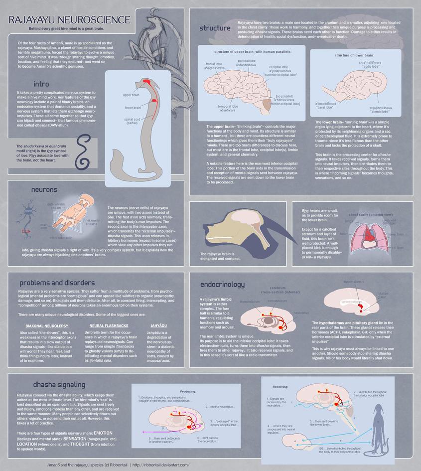 Reference- Rajayayu Neurophysiology by Ribbontail