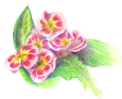 Primroses by yumeruby