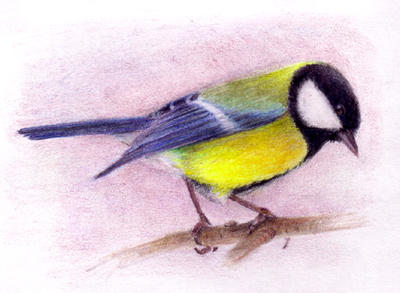 Great tit by yumeruby