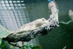 I am the Lizard by audreeeyyy