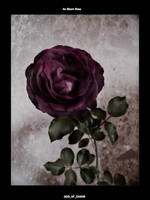 A Black Rose v2 by god-of-chaos