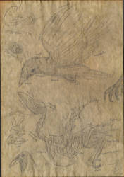 Da Vinci Style Crow Anatomy by classicalguy