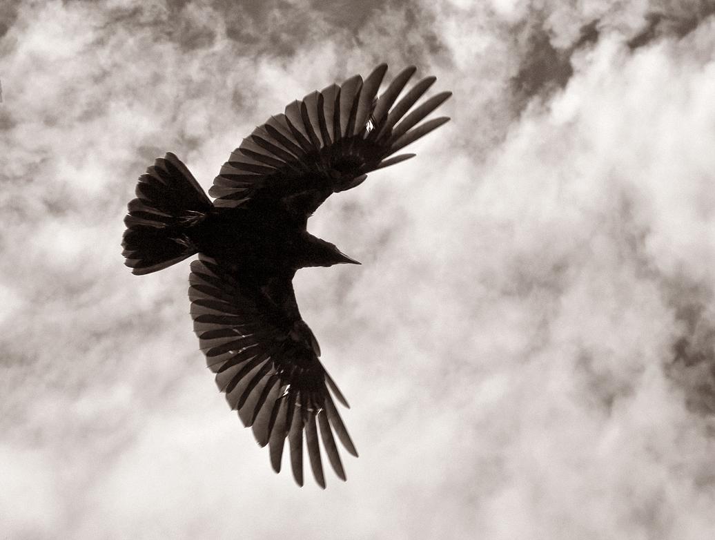 Flying crow tattoos - photo#21