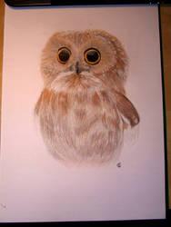 Baby Owl by blue-birdie-drawings