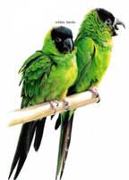 Green Parrots by blue-birdie-drawings