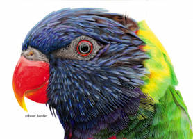 Rainbow lorikeet by blue-birdie-drawings