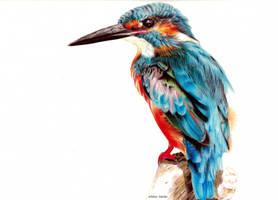 Kingfisher by blue-birdie-drawings