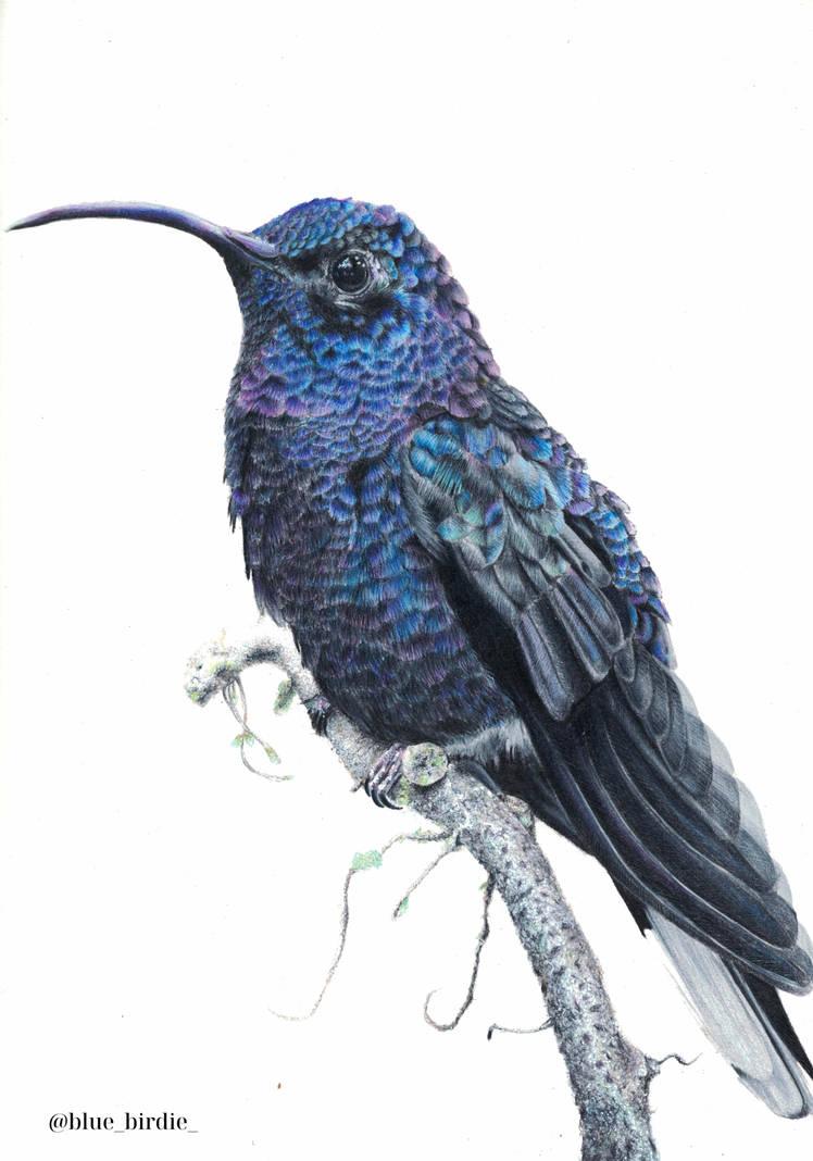 Hummingbird by blue-birdie-drawings