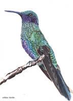 Green Hummingbird by blue-birdie-drawings
