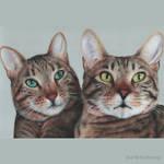 Double cat portrait
