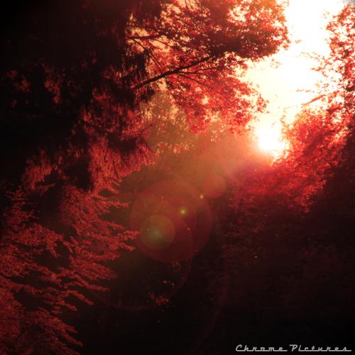 Red Rays by AljoschaThielen