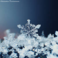 Twinkling Snowflakes by AljoschaThielen
