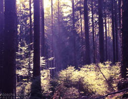 Sunrays in the Morning by AljoschaThielen