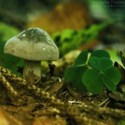 An Almost Lucky Mushroom