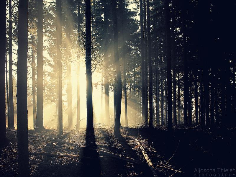 Morning Sun by AljoschaThielen
