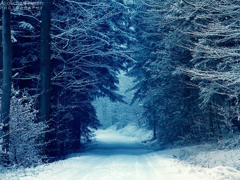 Snowy Path by AljoschaThielen