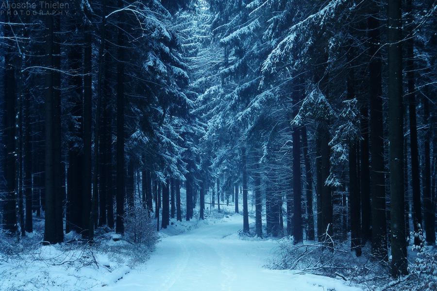 Winter Walk by AljoschaThielen