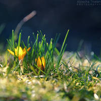 Spring is coming by AljoschaThielen