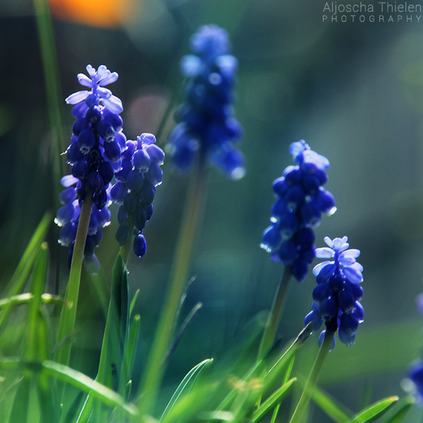 Blue Glow by AljoschaThielen