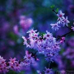 Blossoms by AljoschaThielen