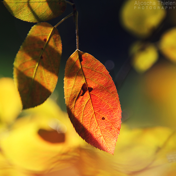 Autumn arrives by AljoschaThielen