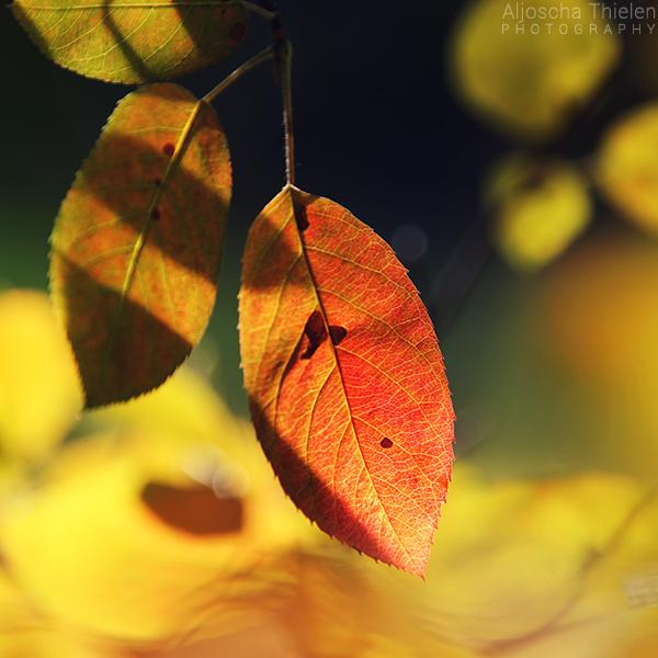 Autumn arrives by AljoschaThielen