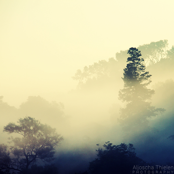 Foggy by AljoschaThielen
