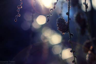 Glimmering evening sun by AljoschaThielen