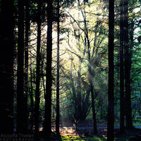 Enchanted Forest by AljoschaThielen