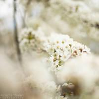 Spring by AljoschaThielen