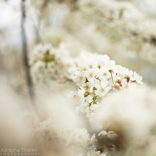 Spring by AljoschaThielen