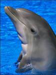 Bottlenose Dolphin Buoy