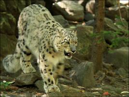 Snow Leopard by mydigitalmind