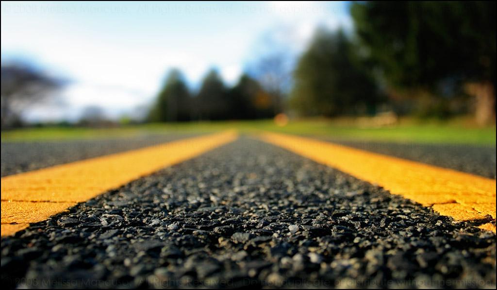 Roadkill by mydigitalmind