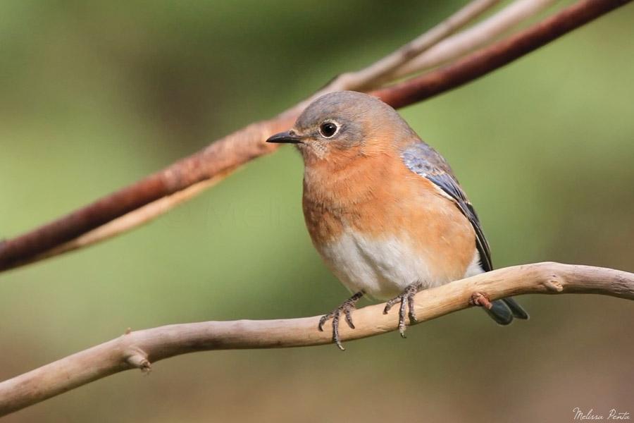 Bluebird by mydigitalmind