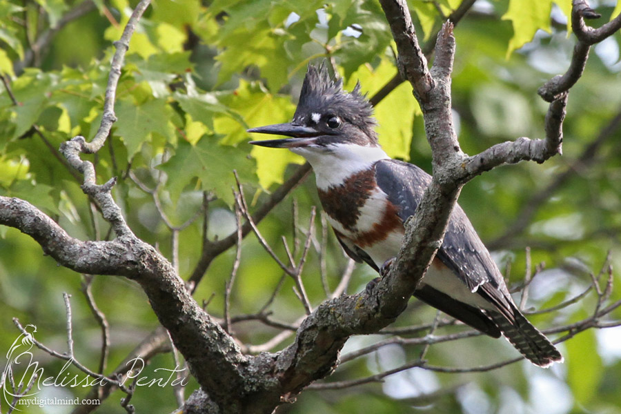 Kingfisher by mydigitalmind