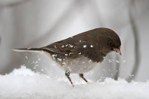 Snow Bird by mydigitalmind