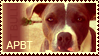 PIT BULL STAMP by Valsier