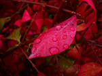 Bejeweled Autumn