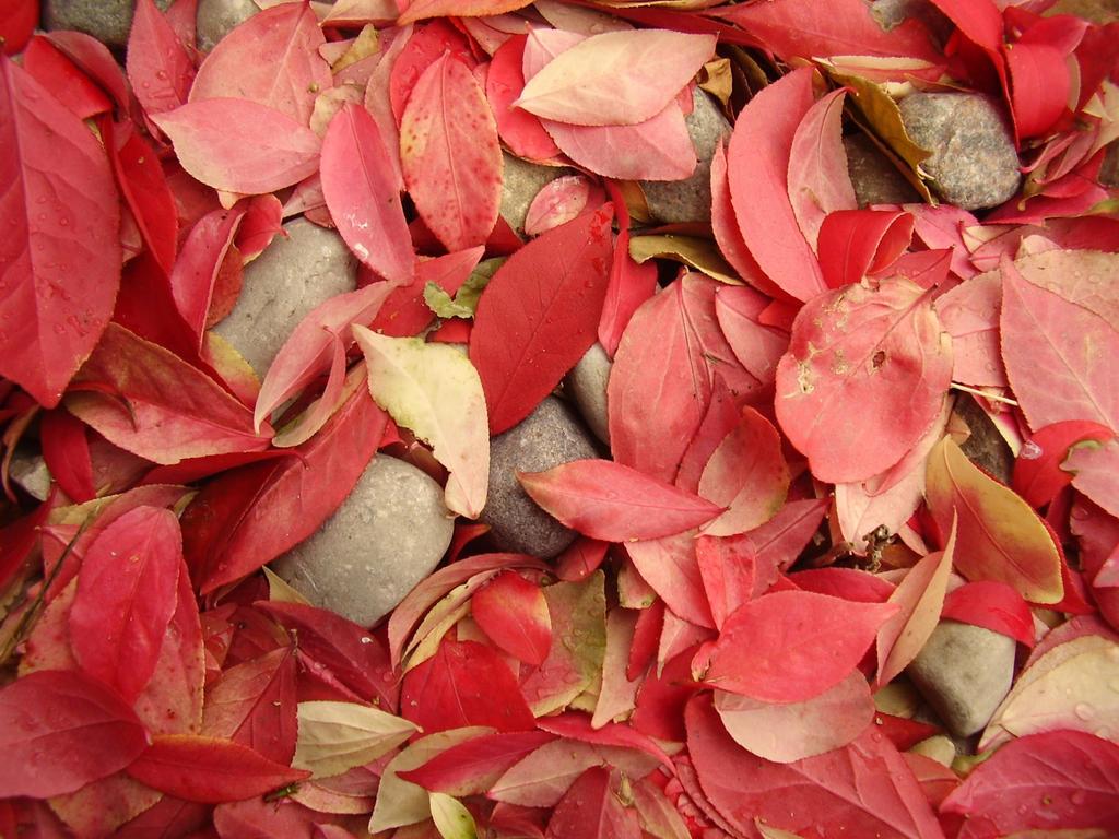 Fallen Leaves by Pentacle5